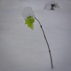 Шматочок літа посеред зими