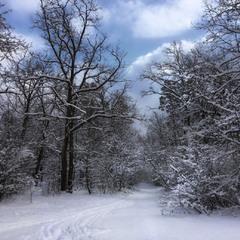 Зима, которой нет