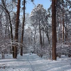 Ще трішечки зими