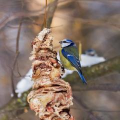 Шаурма для пташки
