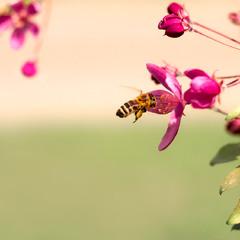 Мир, Праця, Травень... Бджілка :)