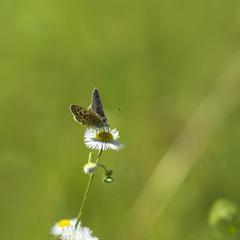 Метелик та квітка: нічого зайвого