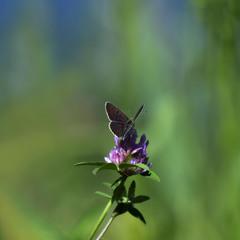 Всесвіт для метелика