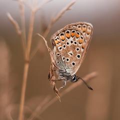 Сон метелика