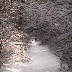 Сніжна пробіжка