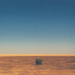 """""""Живущий"""" в одиночестве...Маранджаб песчано-солончаковая пустыня.Иран!"""