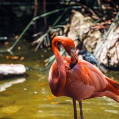 """""""Позер""""...Эко парк Шкарет.Мексика."""