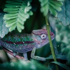 Путешествуя по Мадагаскару...
