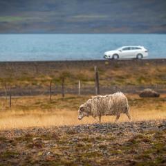 """""""Параллель""""... Исландия..."""