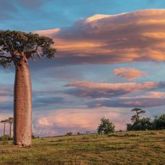 Краски Мадагаскара...Аллея баобабов!