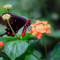 Парк бабочек в Бенальмадене (Коста-дель-Соль, Испания)...