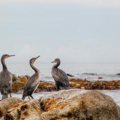 """Трое на """"камне"""" не считая моря..."""