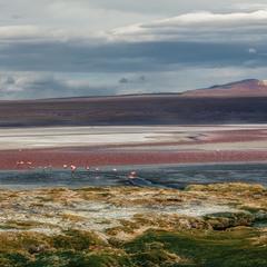 Краски Боливии... Лагуна Колорадо! 4300м над уровнем моря!