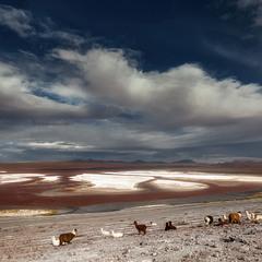 Лагуна Колорадо или Красная Лагуна... Боливия!