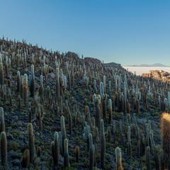 Остров Инкауаси... Боливия!