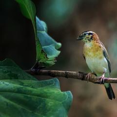 Испания: Парк птиц и бабочек под Эмпуриабрава...