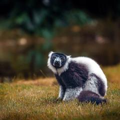 """Глаза в глаза""...Лемурляндия. Мадагаскар!"