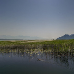 Утро на Скадарском озере... Черногория!