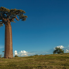 Одинокий баобаб... Мадагаскар!