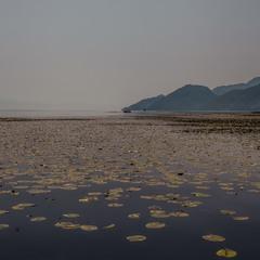 Утро на Скадарском озере...Черногория!