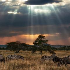 Налетели злые грозовые тучи…саванна...Танзания!