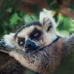 Дремота... Путешествуя по Мадагаскару! (репост).