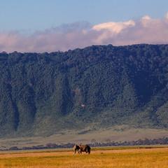 Утро.На краю саванны... Танзания!