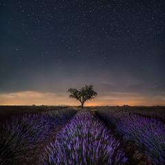 Ночь с ароматом лаванды