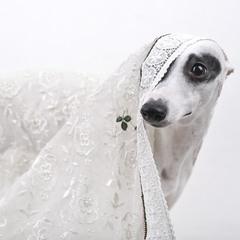 Мэрилин в белом