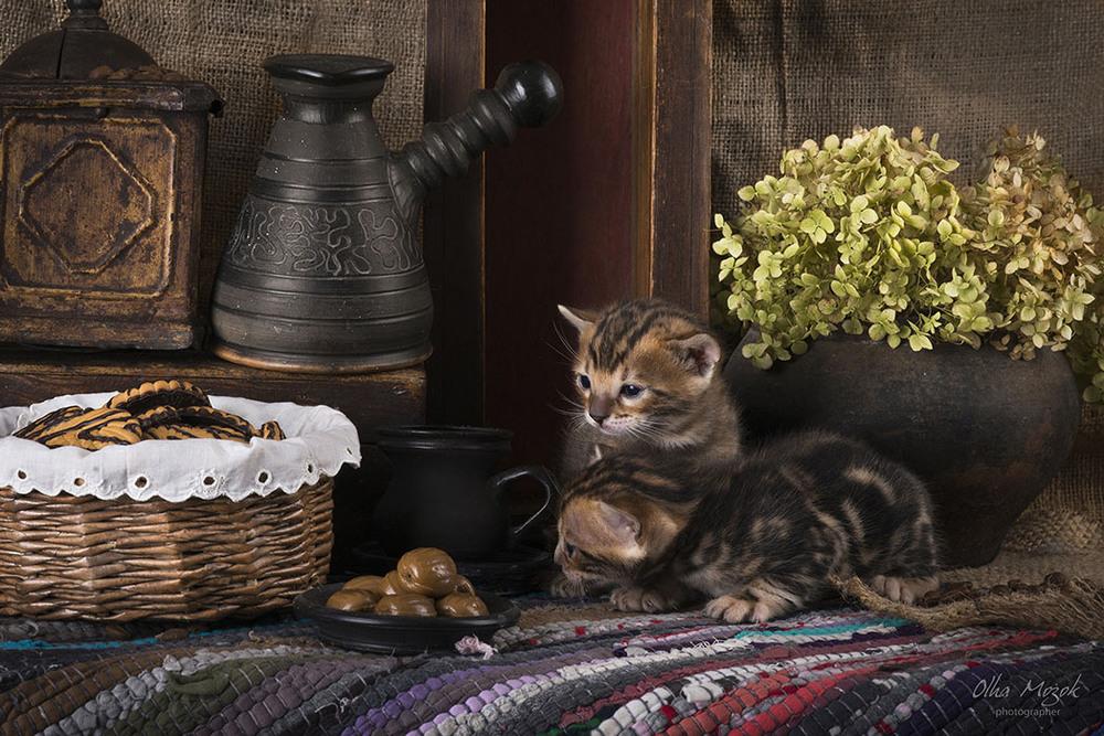 Картины кошки пикассо фото квартиру