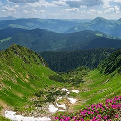 Квітучі Гуцульські Альпи