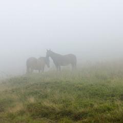 Туман на Боржаві