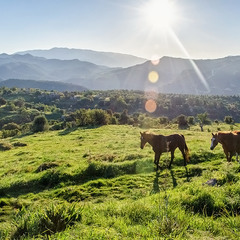 Ранок в горах Троодос