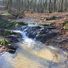 В лісах над рікою Случ