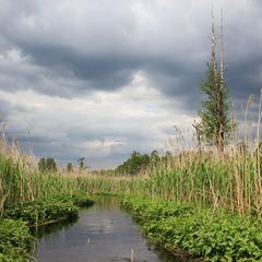 Поліська ріка
