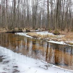 Лісова річка