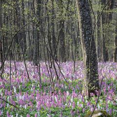 В весняних Товтрах