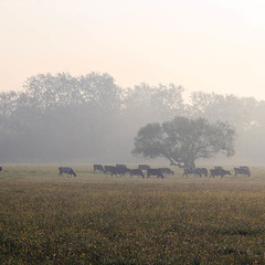 Поліська савана