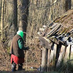 Життя на хуторі: за дровами.