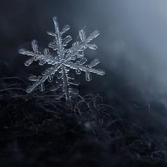 Зимний макромир