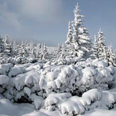 Украинские горы...