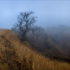 Туманными  тропинками.-2