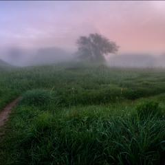 Туманными  тропинками.