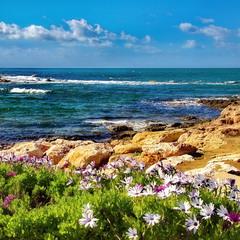 Весенний берег.