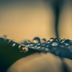 Після дощу..