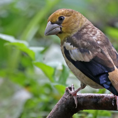 Местный попугай