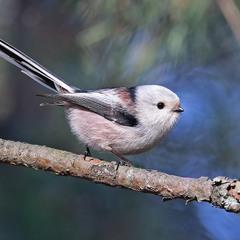Птичка-ложка