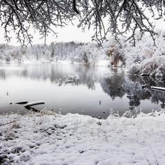 Черно-белая зима