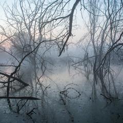 Утро на болоте...