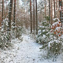 Зимняя цветастая
